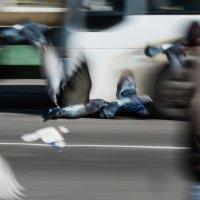 Птицы :: Андрей Борисенко