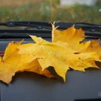 Раньше Осень приходила, а сейчас приезжает...!!! :: Татьяна Аистова