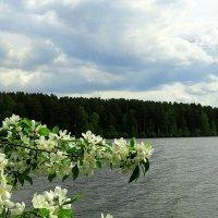 Яблони цветут :: &Любовь& &~&