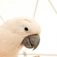 Парк птиц :: Анна Цельм