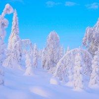 Зимний лес. Финляндия. :: Александр Полутин