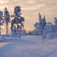 Лыжня в Вуокатти. :: Александр Полутин