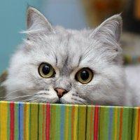 Подарочный кот :: Александр Аль-А