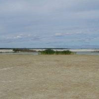 Березовские пески :: Сергей Комков