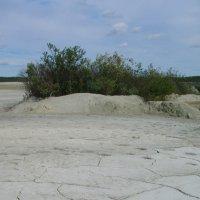Березовские пески 4 :: Сергей Комков