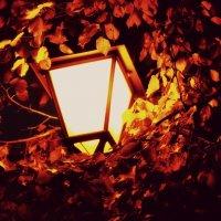 Light :: Олеся Сова