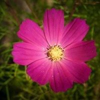 цветок :: Андрей Хлопин