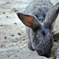 Кролик :: Marina Marik