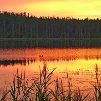 Вечером на озере :: Дмитрий Лупандин