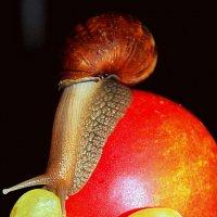 Хочу виноград ! :: marina-rosinka2