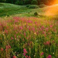 Ароматы летних полей :: Ксения Соварцева
