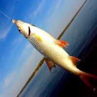 На рыбалке в Твери) :: Катерина Аксенова