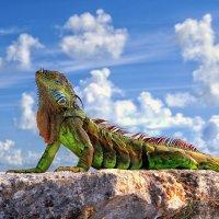 Dragon of Key West :: Roman Mordashev