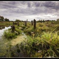 Немного болотно :: Андрей Грибов