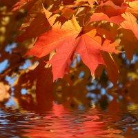 Осень :: Вячеслав Анякин