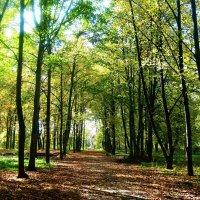 Осень :: Валерия Терещенко