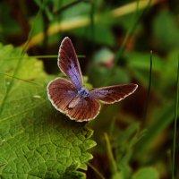 Бабочка :: Marina Erofeeva