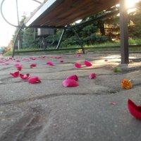 лепестки роз :: Аришка Родкина