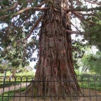 дерево :: Аришка Родкина