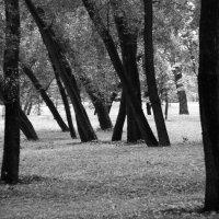 Стволы :: Евгения Лисина