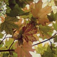 Осень... :: Роман *******