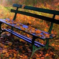 Осеннего парка глухой уголок.. :: Slava Sh