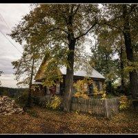 В лесной стороне :: Андрей Грибов