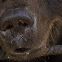 Медвежий нос :: Светлана Винокурова