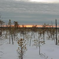 Зимнее болото... :: Сергей