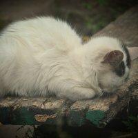прячет носик :: Анастасия Павлова