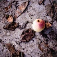 На пыльных тропинках :: Надежда Гутрина