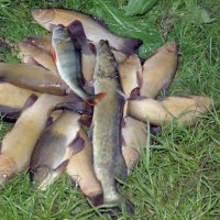 удачная рыбалка :: Маргарита Башева