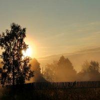 Пробиваясь сквозь листву :: Софья Погорелова