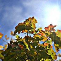 Осеннее солнце :: Олеся