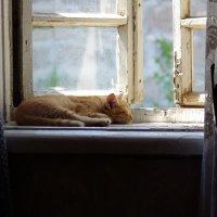 кошка на окошке :: Андрей Медведев
