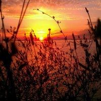 закат над морем :: Анжелика Зверькова