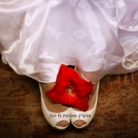 Цветок счастья :: Светлана Григина