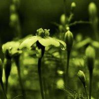 Девушка - цветок :: Михаил Власов