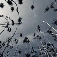 spring :: Лилия Хаматгалеева