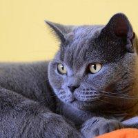 Cats life - relax :: Дмитрий Каминский