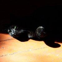 Взгляд из темноты... :: Виталий Виницкий