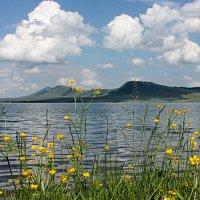 Цветы у озера. :: Наталья Юрова