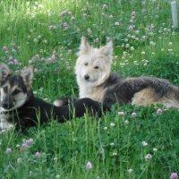 Animals :: Aygerim Danabekova