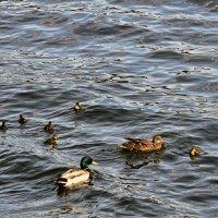 Мама, папа, друг семьи и их дети :: Olga F