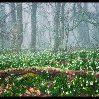 Рай в лесу :: Сергей Радин