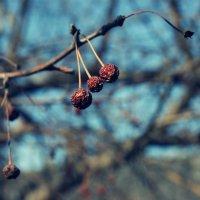 Осень :: Света Кондрашова