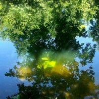 Абстракции природы. Сквозь зеркало воды. :: Veronika Mischenko