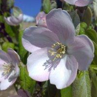 Весна :: Джамал Абдуллаев