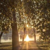 Лучики солнца :: Анна Хотылева