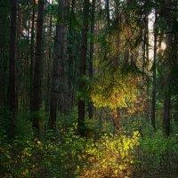 в лесу :: Serge Riazanov